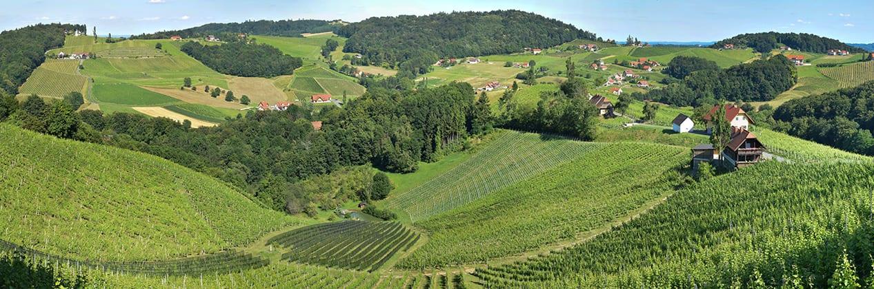 Uitzicht vanaf het terras van wijngoed Kögl
