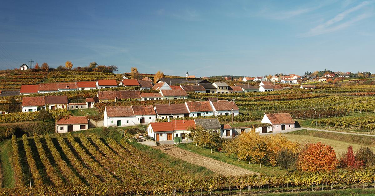 Wijnkelders op de hellingen van het Kamptal