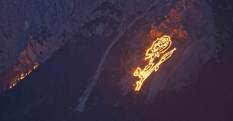 Bergvuur - Roos