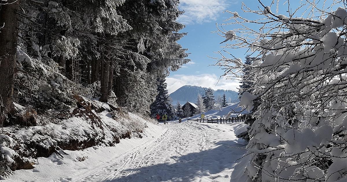 Winterwandelen in het natuurpark