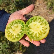 Tomaten van Erich Stekovics
