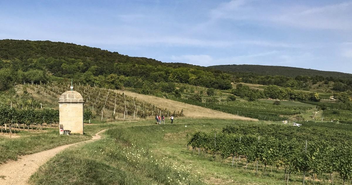 Wijnwandelweg