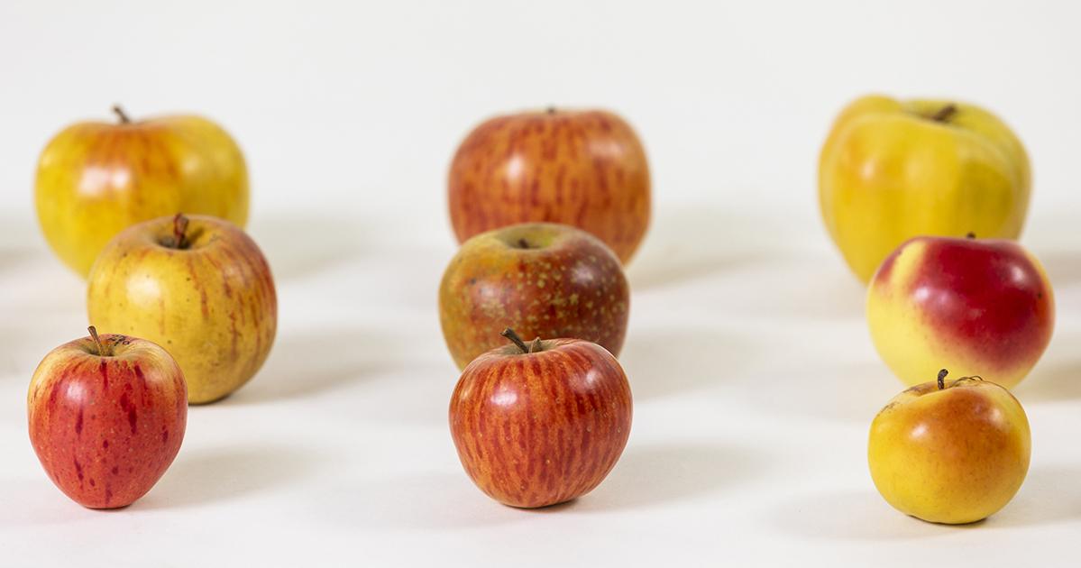 Appelsoorten uit Stiermarken